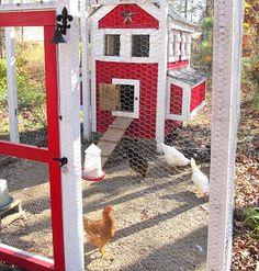 chicken-sittin....lol what a cute chicken house