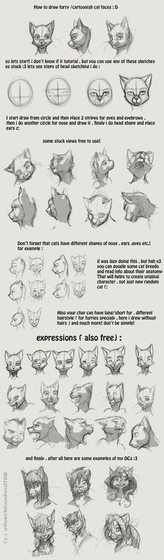 furry / cartoon cat head tutorial by Silverbloodwolf98.deviantart.com on @DeviantArt