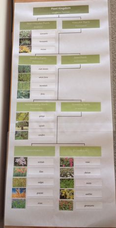 Elementary Observations: Botany.Plant Classification Chart (Printables)