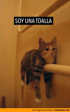 Soy una toalla :D jajaja quiero que le pase eso a mushi @irlandalanis