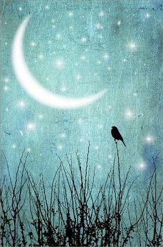 Moonlight ⭐️