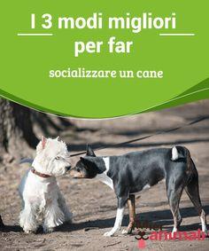I 3 modi migliori per far socializzare un cane   Far #socializzare in modo corretto un #cane sicuramente eviterà la maggior parte dei #problemi #comportamentali che possono presentarsi negli animali. #Addestramento
