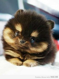 Idk what it is, but I want one!
