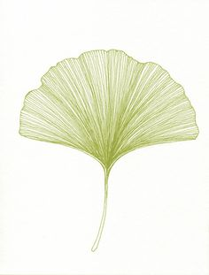 Hey, I found this really awesome Etsy listing at http://www.etsy.com/listing/104774254/ginkgo-leaf-print-of-original-black-or