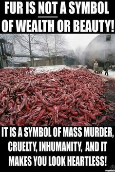 killing animal for fur essay Animal rights essay  and speak out against systematic killing of homeless  avoid attending shows that involve animal submission, opt for faux-fur coat instead.