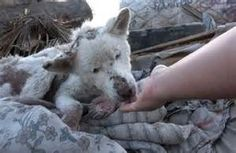abandoned dogs - - Yahoo Image Search Results