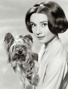 Audrey Hepburn and her Yorkshire Terrier Mr. Famous