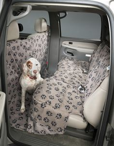 Custom Paw Print Seat Covers by Canine Covers Bucket Seat Covers, Bench Seat Covers, Chilly Dogs, All Types Of Dogs, Dog Varieties, Dog Car Seats, Dog Blanket, Dog Pictures, Your Dog