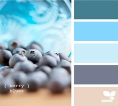 Shades of Blue Color Palette