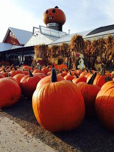 Goebbert's Farm & Garden Center in South Barrington, IL