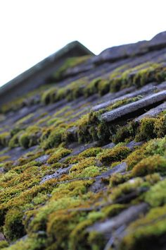 Roof by anmagritt - An-Magritt Japanese Buildings, Japanese Architecture, Merchandising Ideas, Outside Room, Moss Garden, House Inspirations, Coffee And Books, Rooftops, Model Building