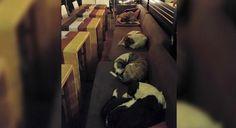 Café de luxo recolhe cães de rua nas noites de frio