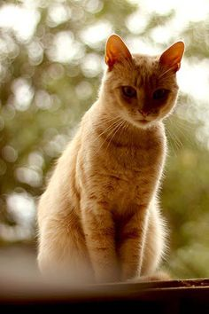 Teofil - a cicákat is szeretjük, a Dörögdi Gyapjú csapat karakteres tagja :)