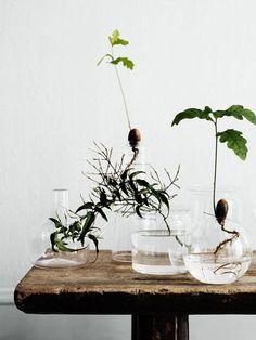 アボカドやハーブを部屋で育てる!?簡単かわいい【水栽培】にトライしよう!