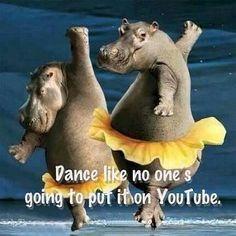 Funny Animals Dancing New Pictures 2012 Hippopotamus For Christmas, Beach Bridesmaids, Dancing Animals, Laughter The Best Medicine, Dance Humor, Dance Memes, Salsa Dancing, Dance Quotes, Lets Dance