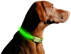 LED Dog Collar - USB Rechargeable - Available in 6 Colors and 6 Sizes - Makes Your Dog Visible, Safe and Seen ** Awesome cat product. Click the image : Cat Collar, Harness and Leash
