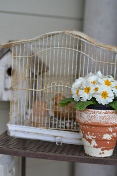White primroses, patina pot and old white bird cage ~ very beautiful and springy!