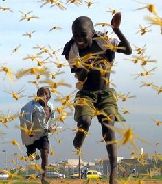 Purple Rain, Senegalese children run as locusts spread in the capital Dakar