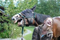 A collection of funny and cute horse pictures, photos, images, memes. Check out to get funny pictures, funny horse quotes. Animals And Pets, Funny Animals, Cute Animals, Funny Horses, Funny Dogs, Funny Humor, Cats Humor, Funny Kitties, Adorable Kittens