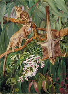 Foliage of a Gum Tree and Flowers of Tecoma, with Flying Opossums, Australia    Marianne North