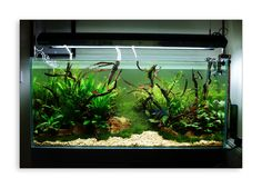 aquarium sloping substrate - Google Search