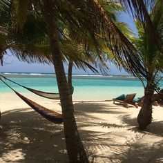 island travel food belize - Google Search