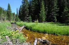 Major milestone reached in effort to protect the Clearwater Basin of Idaho.