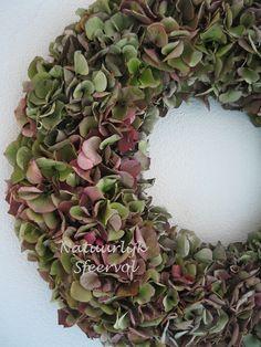 hydrangea/hortensia
