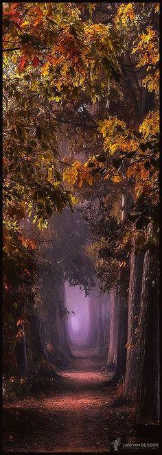 Silent Fairies #by Lars van de Goor #tree avenue path way foggy fog amazhing autumn leaf leaves yellow landscape nature amazing