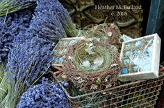 lavender + bird nests