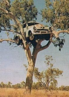 Holden In A Tree - Australia Sur un arbre perché. Abandoned Cars, Abandoned Buildings, Abandoned Places, Abandoned Vehicles, F1 Posters, Weird Trees, Holden Australia, Australian Cars, Vw Vintage