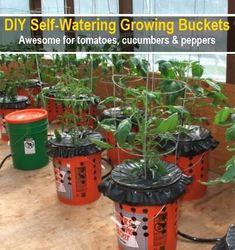 DIY Self Watering Alaska Grow Buckets