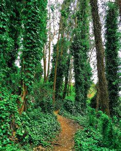 https://flic.kr/p/HwXJwG | Mount Sutro Forest | San Francisco, California