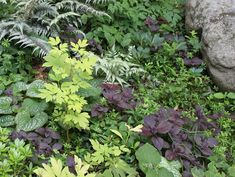 Foliage Garden, Foliage Plants  Johnsen Landscapes & Pools  Mount Kisco, NY Create Yourself, Create Your Own, Book Review, Giveaway