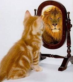 I know this is all about inspiration, but I cant help but laugh.  I always joke w/ the hubby that my cat prob sees himself as 1/2 mountaing lion 1/2 cheetah....especially as he's passed out sleeping on the couch