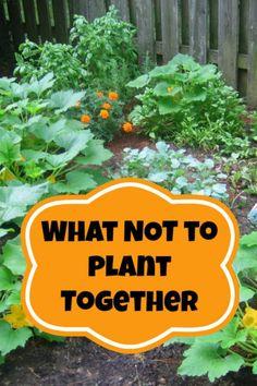 Companion Planting -