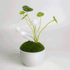 €12,95 Avatar Mushroom Lamp