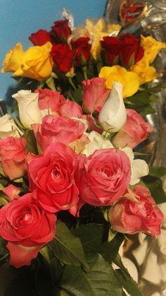 Rose, Flowers, Plants, Painting, Art, Art Background, Pink, Painting Art, Kunst