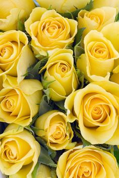 yellow roses bouquets