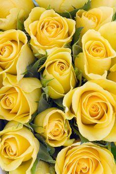 Ramos de rosas amarillos
