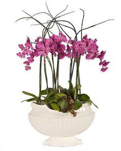 Orchid Dream - Arrangements - Los Angeles Florist tic-tock Couture Florals | Voted Best Florist in Los Angeles