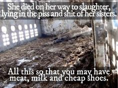 Excuse the language but this is an important image. Not worth it! :'( #vegan #animalrights