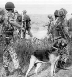 Military Dogs: Vietnam