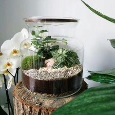 Terrarium Ideas, Terrariums, Go Green, Houseplants, Cactus, Garden Ideas, Flowers, Diy, Gardening