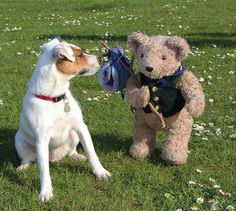 This is Binky's friend Rosie. They are both on our FB page today MoreAboutBinky . Come on over and enter our Binky Lunch Box competition.