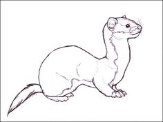 Solitary Weasel by nikkiburr.deviantart.com on @deviantART