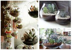 25 ideas de decoración con cactus y suculentas | Plantas