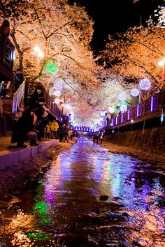 Jinhae cherry blossom festival. It attracts over a million tourists to the port city of Jinhae and it's the world's largest cherry blossom festival, with 340,000 trees, that also has been held for over 40 years. During the festival, there are a large number of stalls mostly offering traditional food, where you can enjoy from the famous chicken skewers to boiled silk worm larvae.