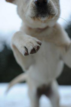 fun puppy pics!