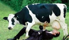 Più si beve latte vaccino e più calcio si perde dalle ossa: parola del British Medical Journal http://jedasupport.altervista.org/blog/sanita/salute-sanita/beve-latte-vaccino-perde-calcio-ossa/